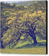 Maybe It's Better This Way Canvas Print by Laurie Search