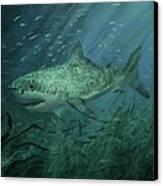 Megadolon Shark Canvas Print by Tom Shropshire