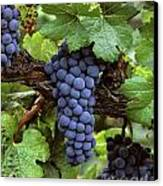 Merlot Clusters Canvas Print by Craig Lovell