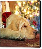 Merry Christmas From Lily Canvas Print by Lori Deiter