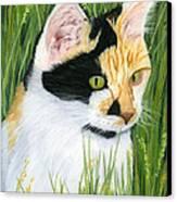 Millie The Adventurer Canvas Print by Sarah Dowson