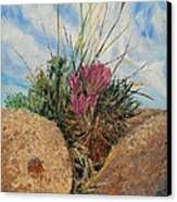 Mini Cactus Garden In Rock Canvas Print by Brian  Pinkey