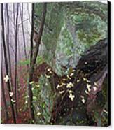Misty Woods Canvas Print by Thomas R Fletcher