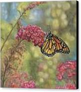 Monarch Butterfly Canvas Print by John Zaccheo