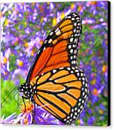 Monarch Butterfly Canvas Print by Olivier Le Queinec