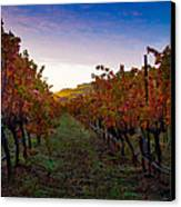 Morning At The Vineyard Canvas Print by Bill Gallagher