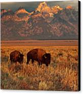 Morning Travels In Grand Teton Canvas Print by Sandra Bronstein