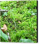 Mossy Bed Canvas Print by Christina Frey