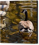Mother Goose Il Canvas Print by Maria Angelica Maira