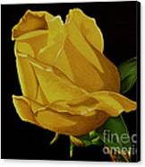 Mother's Yellow Rose Canvas Print by Cory Still
