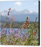 Mountain Wildflowers Canvas Print by Juli Scalzi