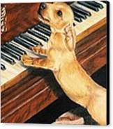 Mozart's Apprentice Canvas Print by Barbara Keith