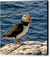 Mr. Puffin Canvas Print by Michael Pickett