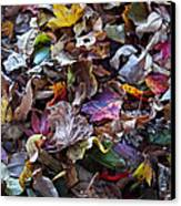 Multicolored Autumn Leaves Canvas Print by Rona Black