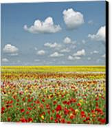 Multicoloured Field Canvas Print by Tim Gainey