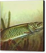 Muskie And Spinner Bait Canvas Print by Jon Q Wright