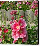 My Garden 2011 Canvas Print by Steve Augustin