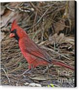 My Name Is Red Canvas Print by Deborah Benoit