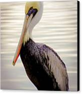 My Visitor Canvas Print by Karen Wiles