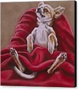 Nap Hard Canvas Print by Barbara Keith