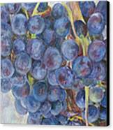 Napa Grapes 1 Canvas Print by Nick Vogel