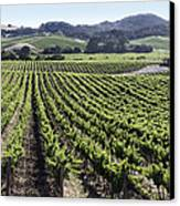 Napa Valley Vineyard Canvas Print by Dee  Savage