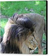 National Zoo - Lion - 01132 Canvas Print by DC Photographer