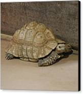 National Zoo - Turtle - 12121 Canvas Print by DC Photographer
