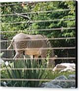National Zoo - Zebra - 12121 Canvas Print by DC Photographer