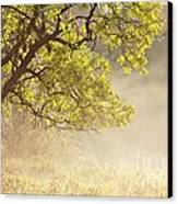 Nebulous Tree Canvas Print by Heiko Koehrer-Wagner