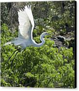 Need More Branches Canvas Print by Carolyn Marshall