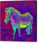 Neon Zebra Canvas Print by Jane Schnetlage