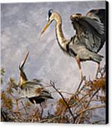 Nesting Time Canvas Print by Debra and Dave Vanderlaan