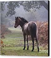 New Forest Pony Canvas Print by Dave Pressland FLPA
