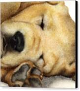 Nipper Nap... Canvas Print by Will Bullas