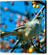 Northern Mockingbird Canvas Print by Bob Orsillo