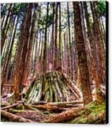 Northwest Old Growth Canvas Print by Spencer McDonald