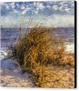 November Dune Grass Canvas Print by Daniel Eskridge