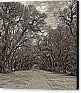 Oak Alley 3 Sepia Canvas Print by Steve Harrington