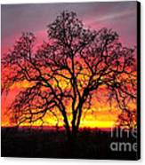 Oak Silhouette Canvas Print by Cheryl Young