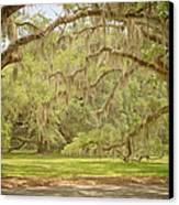Oak Trees Draped With Spanish Moss Canvas Print by Kim Hojnacki