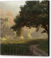 Ojai Vineyard Canvas Print by Kathleen Gauthier