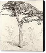 Old Cedar Tree In Botanic Garden Chelsea Canvas Print by Samuel Palmer