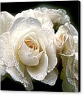 Old Lace Rose Bouquet Canvas Print by Jennie Marie Schell
