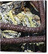 Old Trap Close-up Canvas Print by Minnie Lippiatt