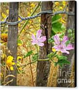On The Fence Canvas Print by Lainie Wrightson