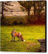 One Red Fox Canvas Print by Bob Orsillo