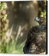 Only An Eagle Can Be As Sharp As An Eagle Canvas Print by Munir El Kadi