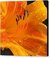Orange Rain Canvas Print by Karen Wiles