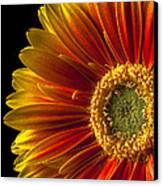 Orange Yellow Mum Close Up Canvas Print by Garry Gay